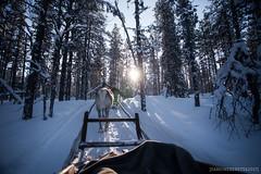 IMG_2694 (F@bione©) Tags: lapponia lapland marzo 2017 husky aurora boreale northenlight circolo polare artico rovagnemi finalndia finland