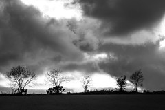 ... we are 5 ... (jane64pics) Tags: 5 trees 5trees ilovetrees treeline clouds cloudy cloud cloudscape bw sky skyscape eveningsky evening eveninglight field janefriel janefriel2017 wicklow cowicklow countryside gardencounty greystones