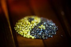 Yin & Yang (HMM) (matthiasstiefel) Tags: chia hirse macro macromondays makro millet salviahispanica samen seeds yinyang