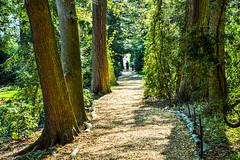 DSC_0947 (Beangrau1962) Tags: leadinglines path walking twopeople trees green