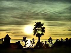 Malibu sunset (fariasmarian) Tags: malibu beach la losangeles california californiaphotos us usa travel road sky sun sunset afternoon dailyshot shadows tree trees trip nature beautiful landscape