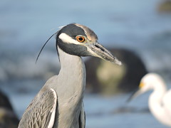 Wading Birds (wildwest713) Tags:
