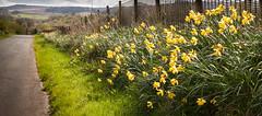 1920p 72dpi-7054 (reach.richardgibbens) Tags: bowland lancashire england uk littledale fell moorland moor valley dale