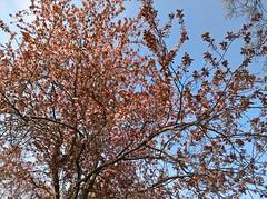 WP_20170325_08_55_58_Pro (vale 83) Tags: flowering tree microsoft lumia 550 friends wpphoto wearejuxt flickrcolour autofocus colourartaward coloursplosion beautifulexpression yourbestoftoday
