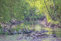 Biotop Homburg-Beeden (Das Saarland) Tags: saarland homburg saarpfalzkreis biotop