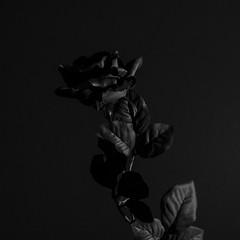Black Flower 7 (hans.gp.panke) Tags: flower black blackflower bw artificial bnw
