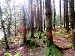 Through the Woods (Kyle Brooker) Tags: ireland mayo waterfall woods trees nature kylebrooker kyle sunshine suninbackground light flicker numinous experience dreamy beautiful iphone iphone6 camera