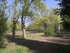 St-Thomas-Friedhof_e-m10_1004099607 (Torben*) Tags: rawtherapee olympusomdem10 olympusm17mmf18 berlin neukoelln stthomasfriedhof friedhof graveyard cemetery fruehling spring