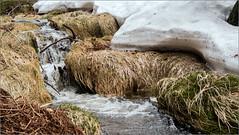 Die Bächlein fließen / The brooks flow (ludwigrudolf232) Tags: wasser bach bayerischer wald schneeschmelze