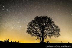 shining tree (chrisroosfotografie) Tags: tree night nightphotography coldnight stars starsphotography hill sky nightsky chrisroosfotografiech nacht nachtaufnahmen sterne fotografie baum