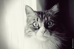 Beware of the cat (Miguel Puerta) Tags: mpuerta 2017 canon animales animals mascotas feline felino gato cat bigotes whiskers fur peluche peludo beautifulexpression
