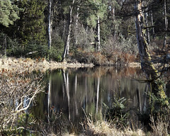 CALLY LOCH (SwaloPhoto) Tags: fujixt1 reflections cally loch atholl woods dunkeld perthshire trees fujinon xf18135mm f3556 rlmoiswr handheld
