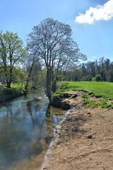 River Scene (alotroy) Tags: river riverscene water stream tree meadow