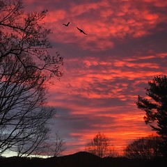 Sunrise, April 8, 2017 (jeanne.marie.) Tags: onepieceofsky 100x2017 patternsinnature trees mountains sky clouds pink flying birds silhouettes elkmountain ashevillenc iphone7plus iphoneography spring sunrise