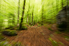 Speed art (yvan642) Tags: canon1740 canon art printemps spring landscape green forest forêt vitesse speed