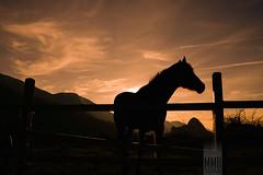 """""""Horse"""" Luis xD (MMB Fotografia) Tags: mmb fotografía photography fotografo mmbfotografia valencia canon ff fx eos 1dsmkii luz light colores colors asturias horse caballo montañas mountains sunset atardecer"""