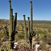 Proofs of Multiple Mark's (Saguaro National Park)