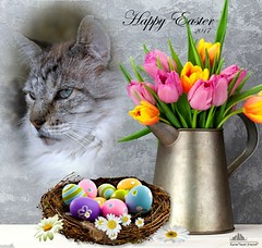 Happy Easter 2017 (Xena*best friend*) Tags: davide happyeaster easter cats whiskers feline katzen gatto gato chats furry fur pussycat feral tiger pet kittens kitty piedmontitaly piemonte canoneos500d italy wood woods wildanimals wild paws animals calico markings ©allrightsreserved pets purr eastereggs beingtogether company bestofcats