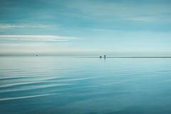 always and forever (stocks photography.) Tags: michaelmarsh photographer whitstable photography coast seaside tankerton alwaysandforever sea walkingthedog dog minimalism wallart