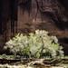 Spring in Canyon De Chelly