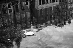 (angheloflores) Tags: amsterdam canal water reflections zwaan swan urban explore blackandwhite travel architecture street netherlands bokeh