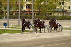 Berlin Trabrennbahn Mariendorf 14.4.2017 (rieblinga) Tags: berlin tempelhof mariendorf trabrennbahn pferde sport wetten rennen 1442017