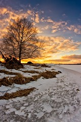 Birch Tree In The Sunset (k009034) Tags: 500px sky sunset nature clouds tree silhouette snow birch fields countryside agriculture rural springtime no people finland tranquil scene copy space oulainen matkaniva teamcanon