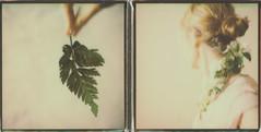 Chercher le printemps (Looking for spring) (l'imagerie poétique) Tags: limageriepoétique poeticimagery springpolaroidweek2017 polaroidsx70sonar theimpossibleproject unpeuflou abitofblur romantic soft diptych 600colorfilm instantphotography polavoid