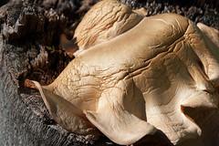 patterns of age (Leonard J Matthews) Tags: aged fungi stump flora nature australia mythoto creation life environment