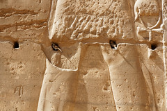 Sparrows at Medinet Habu (Chris Irie) Tags: sparrow medinethabu temple luxor egypt