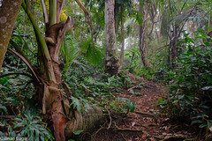 Jungle path (brian eagar - very busy - not much time to comment) Tags: costarica2017springapril costarica 2017 april spring jungle gandocamanzanillonationalwildliferefuge manzanillo manzanillowildliferefuge plants green forest path trail leaf leaves trees trunk