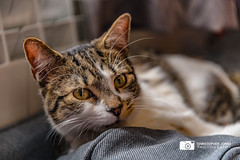 Twinkle! (C.P.JonesPhotography) Tags: cat cats felines catphotography pets pet