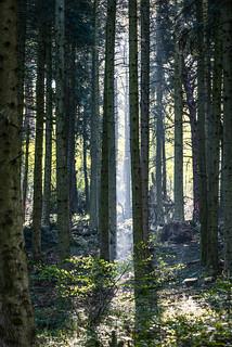 Puit de lumière en Forêt