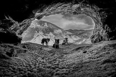 """Are we all agreed? ... we're not going in there cos there might be horses!!"" - [ref previous tenting shot] (JJFET) Tags: littledoglaughednoiret cave dogs assynt bone caves border collie dog sheepdog"