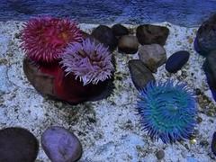 Hands on Rockpool (WingsofFreedom5) Tags: sealife orlando seaturtles fish sharks tidepools stingrays