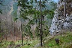 Mariahilfbergi kevadkanarbik (anuwintschalek) Tags: nikond7000 d7k 18140vr austria niederösterreich mariahilfberg landscape mägi mountain berg palverännukoht kevad frühling spring april 2017 männimets kiefernwald pineforest kanarbik heather kevadkanarbik heidekraut