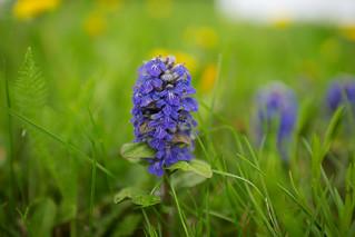 Flower macro before the rain