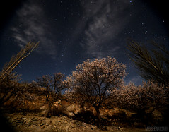 'The Tree of Life' (Mobeen_Ansari (in Seattle, LA, TX and DC July-Augu) Tags: apricot spring tree gilgitbaltistan gulmit gojal hunza pakistan landscape stars starry sky night