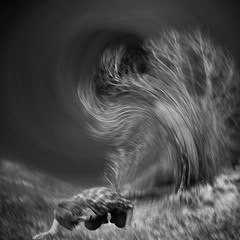 disturbances (old&timer) Tags: background infrared blackandwhite composite surreal model deviantart birdsistersstock texture paulinemoss song4u oldtimer imagery digitalart laszlolocsei