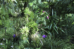 2017_04_22_Atlanta Botanical Gardens_250 (tbottom) Tags: flowers orchids gardens atlantabotanicalgardens terrybottom botanicalgardens