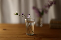 ... (L'hort de la Lolo | Agnès) Tags: 50mm canoneos6d flowers anemones glass vaso got vidre cristal stilllife onthetable bokeh dof purple naturallight wildflowers books explore lhortdelalolo