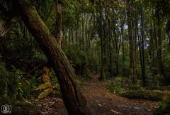 El bosque (Takk Heima Fotografia) Tags: bosque forest wild chile sur de carretera austral patagonia chilena canon