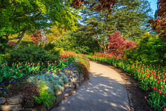 Spring Colors (michaelsabijon) Tags: spring colors nature vancouver vancouverisawesome ilovevancouver beautfulbritishcolumbia canada canoncanada gardens flowers queenelizabethpark gardenstosee cans2s