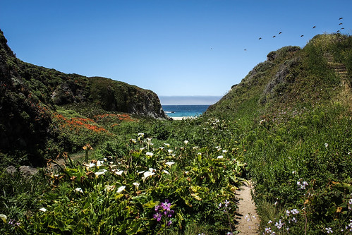 Calla Lilies Valley at Garrapata State Beach - Carmel, California