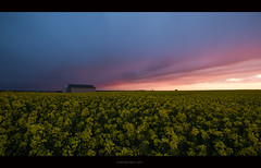 Symphonie des champs (Skylights*) Tags: flowers sunset france fleurs canon landscape evening spring country champs culture rape fields agriculture paysage soir campagne normandy printemps 1022mm calvados eveninglight couchdesoleil colza bassenormandie 2013 550d ctedenacre lumiredusoir igorhollman