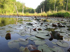 symphony of frogs (etherealillusion) Tags: maryland southern coastal chesapeake southernmaryland
