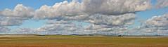 Jamestown Wind Farm, South Australia_6315-17 (Rikx) Tags: sky field clouds landscape open nopeople crop southaustralia powerstation jamestown windturbine windfarm greenenergy grainbelt midnorth horizonpollution