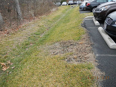 8783118421_c563e4d6a3 (Stormwater Maintenance, LLC) Tags: grass problem filterstrip sheetflow