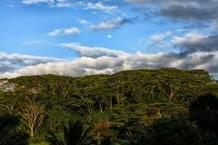 Moonrise over Kauai (Christopher Walters Photography) Tags: blue trees sunset plants sun sunlight moon green clouds island pacific bluesky fullmoon pacificocean moonrise northshore valley kauai vegetation lush rise goldenhour kauaisunset canonef50mmf14 kauainorthshore kauaimoonrise kalihiwaivalley fullmoonrise canoneos5dmarkii