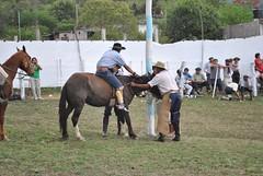 guerrero_0184 (jaramillohectorsergio) Tags: argentina criollo caballo palenque jinete gauchos jujuy monta gaucho doma jinetes jineteada